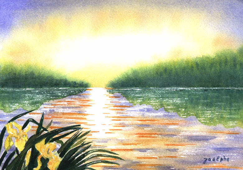 Les iris au bord du lac
